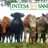 "Intesa San Paolo ""vende"" 300.000 clienti a Crédit Agricole come mucche"