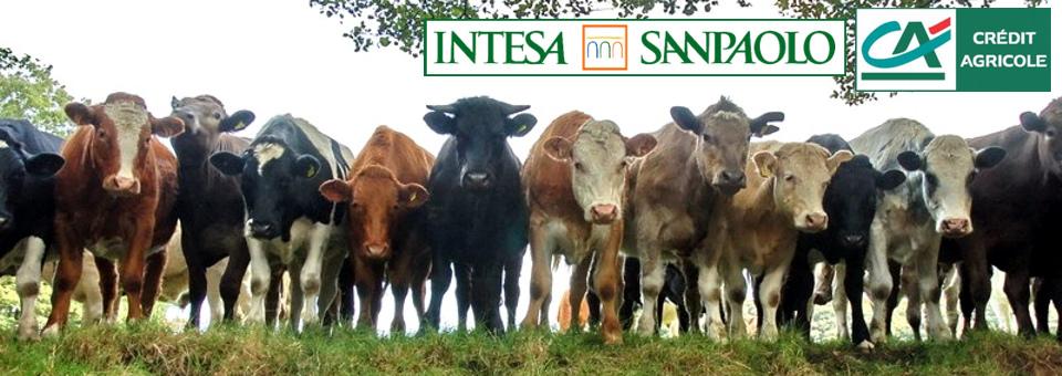 Intesa - Crédit Agricole: Venduti 300.000 Clienti Come Si Vendono le Mucche